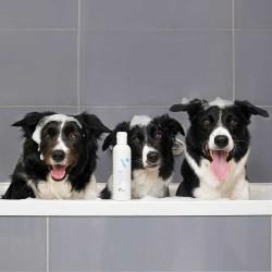 BEAUTY & CARE SHAMPOO - dermokosmetyczny szampon dla psów i kotów