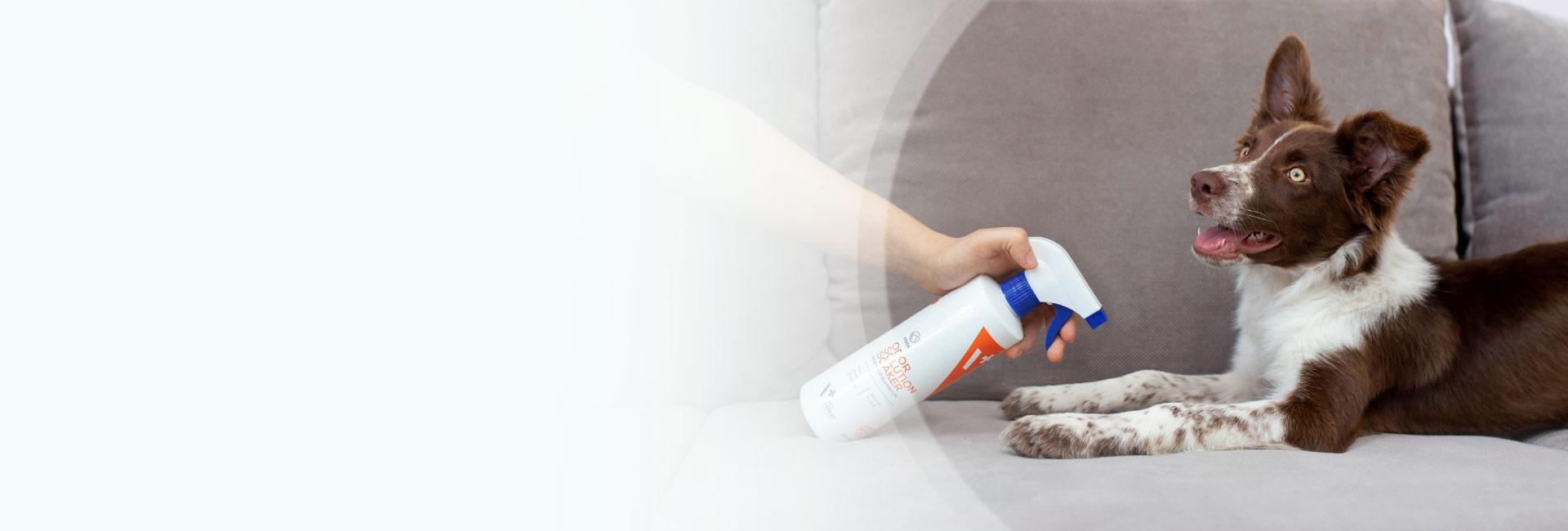 Eliminacja zapachu u psów