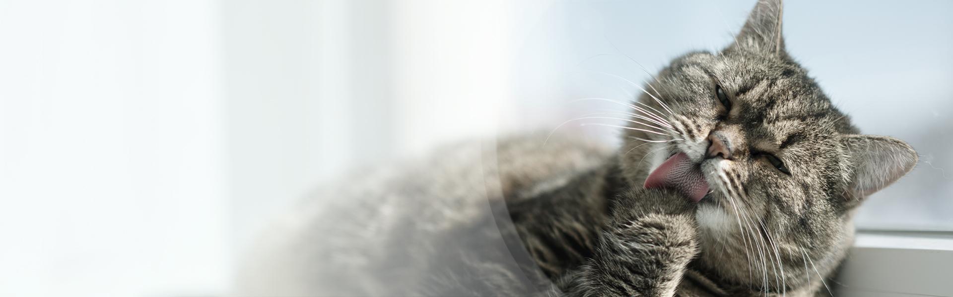 Kot senior – jak karmić idbać ostarszego kota?